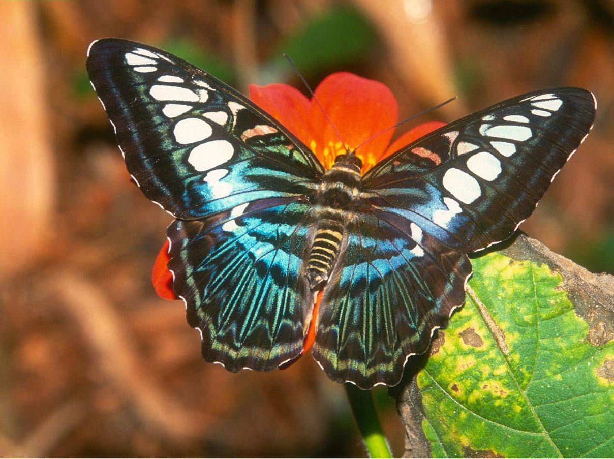 Imagenes De Mariposas De Colores: 301 Moved Permanently