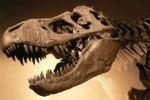 fosil-dinosaurio